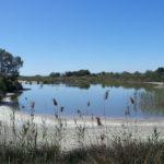 Vogels spotten in het natuurpark Albufera